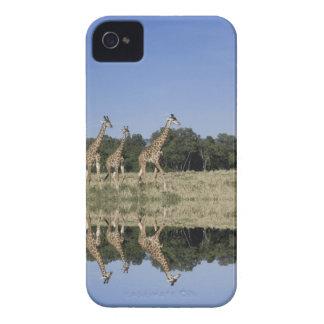 Masai Giraffes, Giraffa camelopardalis, Masai iPhone 4 Covers