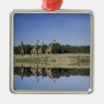 Masai Giraffes, Giraffa camelopardalis, Masai Metal Ornament
