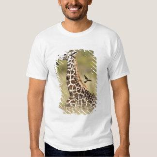 Masai giraffes, Giraffa camelopardalis Shirt