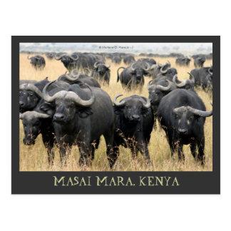 Masai Mara African Buffaloes Kenya Postcard
