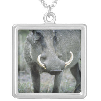 Masai Mara del africanus del Phacochoerus de Warth Joyeria Personalizada
