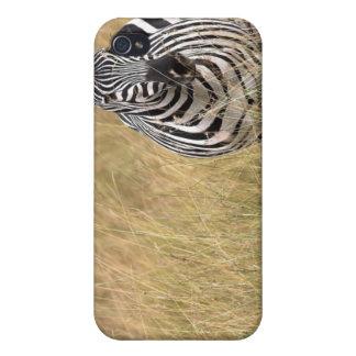 Masai Mara, Kenya Covers For iPhone 4