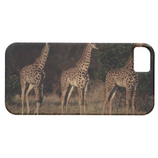 Masai Mara National Reserve 3 iPhone 5 Covers