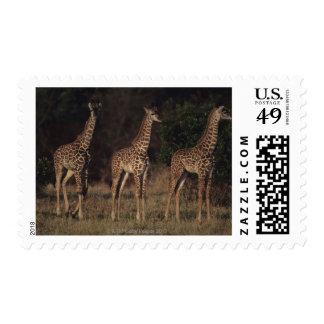 Masai Mara National Reserve 3 Postage