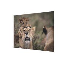 Masai Mara National Reserve 4 Canvas Print