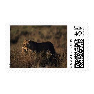 Masai Mara National Reserve 4 Postage