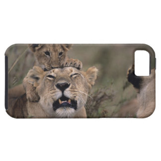 Masai Mara National Reserve 6 iPhone 5 Cases