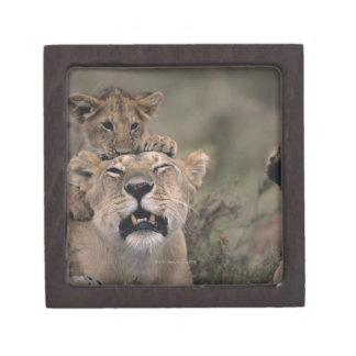 Masai Mara National Reserve 6 Gift Box