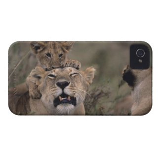 Masai Mara National Reserve 6 iPhone 4 Cover