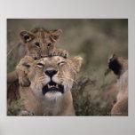 Masai Mara National Reserve 6 Posters