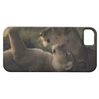 Masai Mara National Reserve 7 iPhone 5 Cover