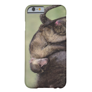Masai Mara National Reserve Barely There iPhone 6 Case