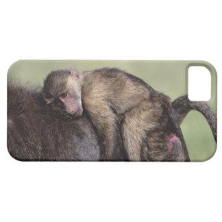 Masai Mara National Reserve iPhone SE/5/5s Case