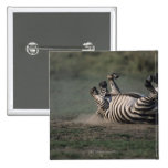 Masai Mara National Reserve, Kenya 2 Pinback Buttons