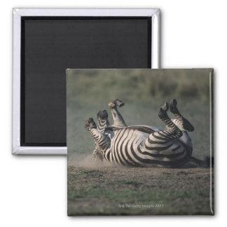 Masai Mara National Reserve, Kenya 2 Magnet