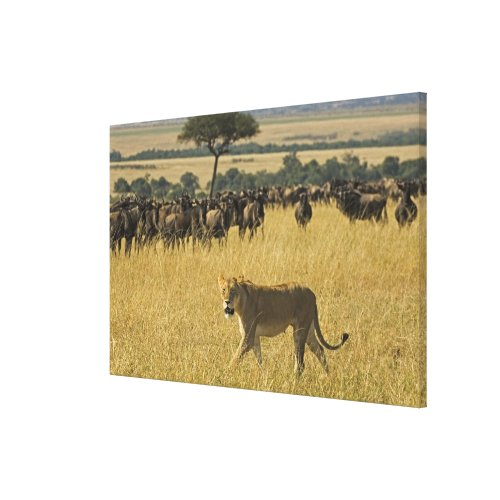 Masai Mara National Reserve Kenya Africa Canvas Print