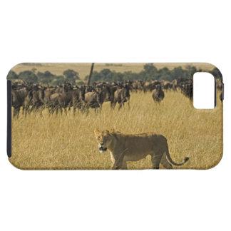 Masai Mara National Reserve, Kenya, Africa iPhone 5 Cover