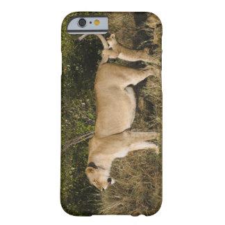Masai Mara National Reserve, Kenya Barely There iPhone 6 Case