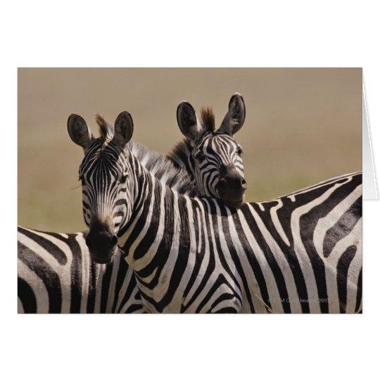 Masai Mara National Reserve, Kenya, Jul 2005 3 Card
