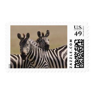 Masai Mara National Reserve, Kenya, Jul 2005 3 Postage Stamps
