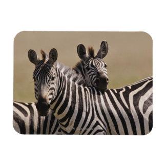 Masai Mara National Reserve, Kenya, Jul 2005 3 Rectangular Photo Magnet