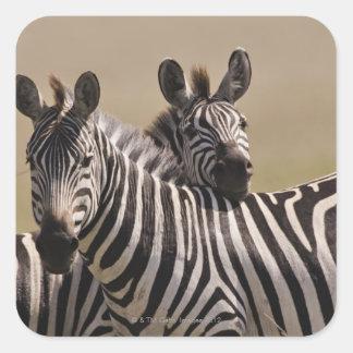 Masai Mara National Reserve, Kenya, Jul 2005 3 Square Sticker