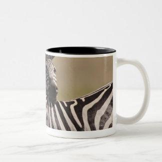 Masai Mara National Reserve, Kenya, Jul 2005 3 Two-Tone Coffee Mug