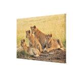 Masai Mara National Reserve, Kenya, Jul 2005 Stretched Canvas Print