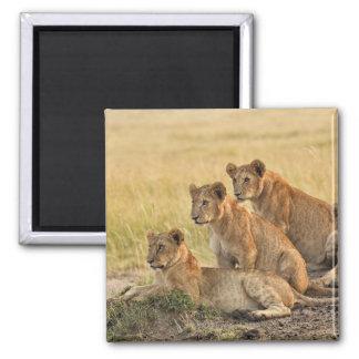 Masai Mara National Reserve, Kenya, Jul 2005 Magnet