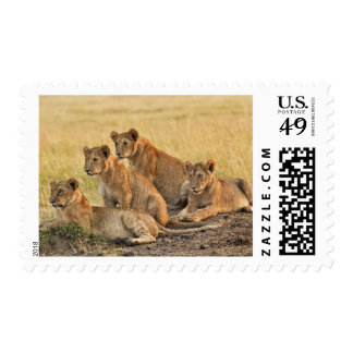Masai Mara National Reserve, Kenya, Jul 2005 Stamps