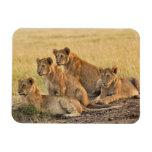 Masai Mara National Reserve, Kenya, Jul 2005 Rectangular Photo Magnet