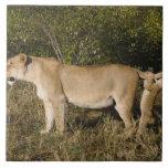 Masai Mara National Reserve, Kenya Large Square Tile