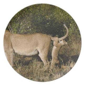 Masai Mara National Reserve, Kenya Melamine Plate