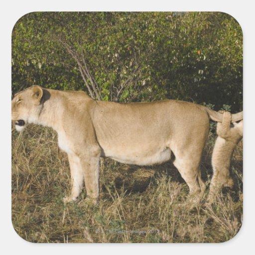 Masai Mara National Reserve, Kenya Square Sticker