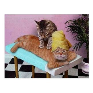 Masaje divertido del gato tarjeta postal