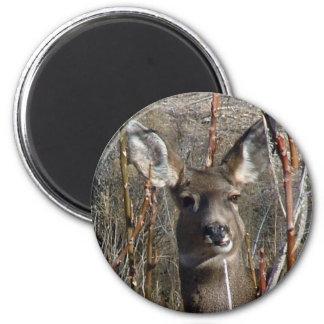 Mascar ciervos imán redondo 5 cm