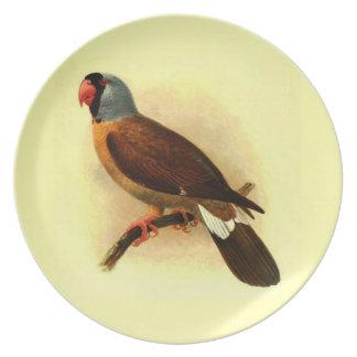 Mascarinus Mascarinus Melamine Plate