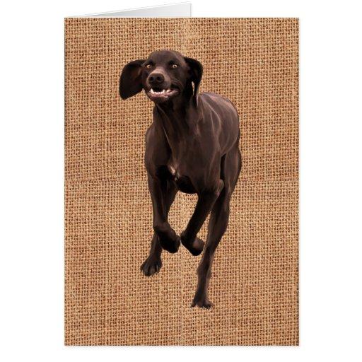 Mascota-amante alemán del indicador de pelo corto tarjeta de felicitación