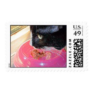 mascota animal del gato de la cabeza del rosa de sello