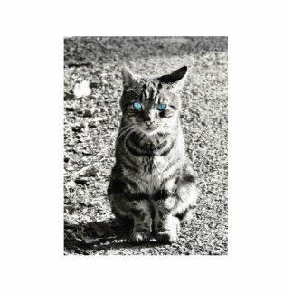 Mascota animal del gato esculturas fotográficas