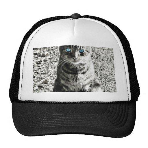 Mascota animal del gato gorro