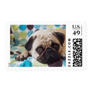 mascota curioso de los jóvenes sello postal