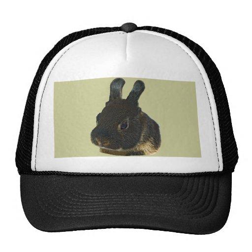 Mascota del conejo gorro