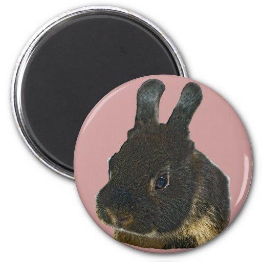 Mascota del conejo imanes de nevera
