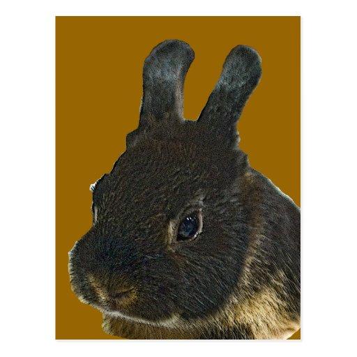 Mascota del conejo tarjeta postal
