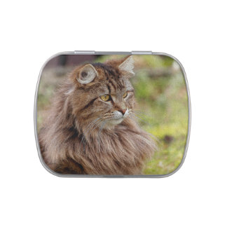 Mascota del gato de Coon de Maine Jarrones De Dulces