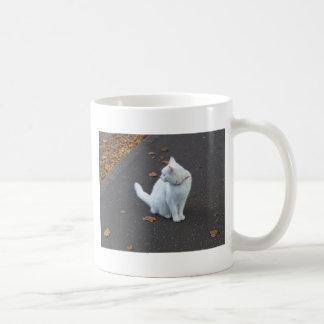 Mascota del gato taza de café