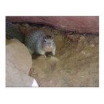 Mascota del parque nacional de Zion Tarjetas Postales