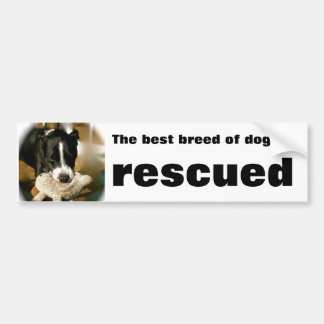 Mascota del rescate