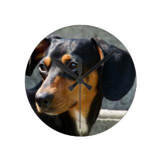 Mascota dulce del perro reloj